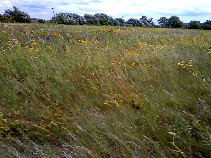 Prairie1
