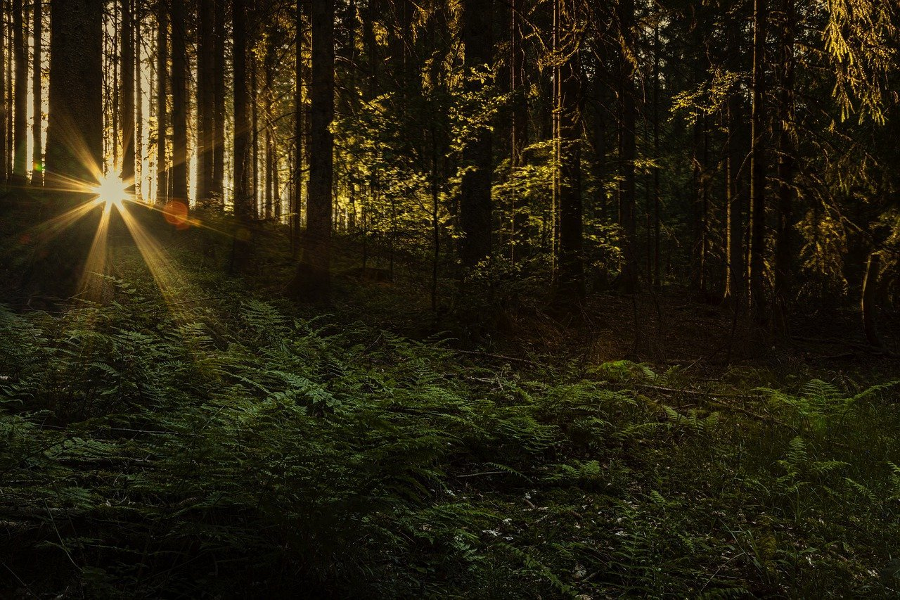 Black Forest Dream